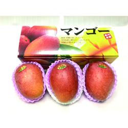 沖縄県産アップルマンゴー900g