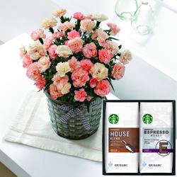 (母)カーネーション(フロランタン)&「スターバックス」オリガミコーヒー