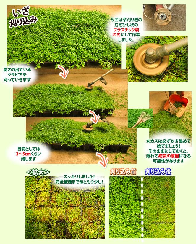 http://www.idemitsu-tm.jp/kurapia/images/gardening01_ph022.jpg